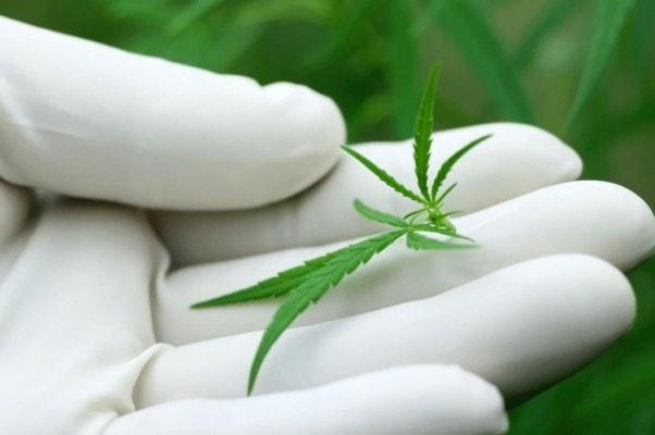 """Le Cannabis Médical en Pharmacie"""" dans le magazine Salle d'attente"""