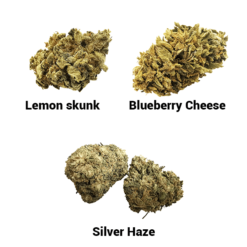 starter pack greenhouse lemon skunk blueberry cheese silver haze cbd cannabis fleur