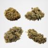 Starter Pack Outdoor cbd cannabis